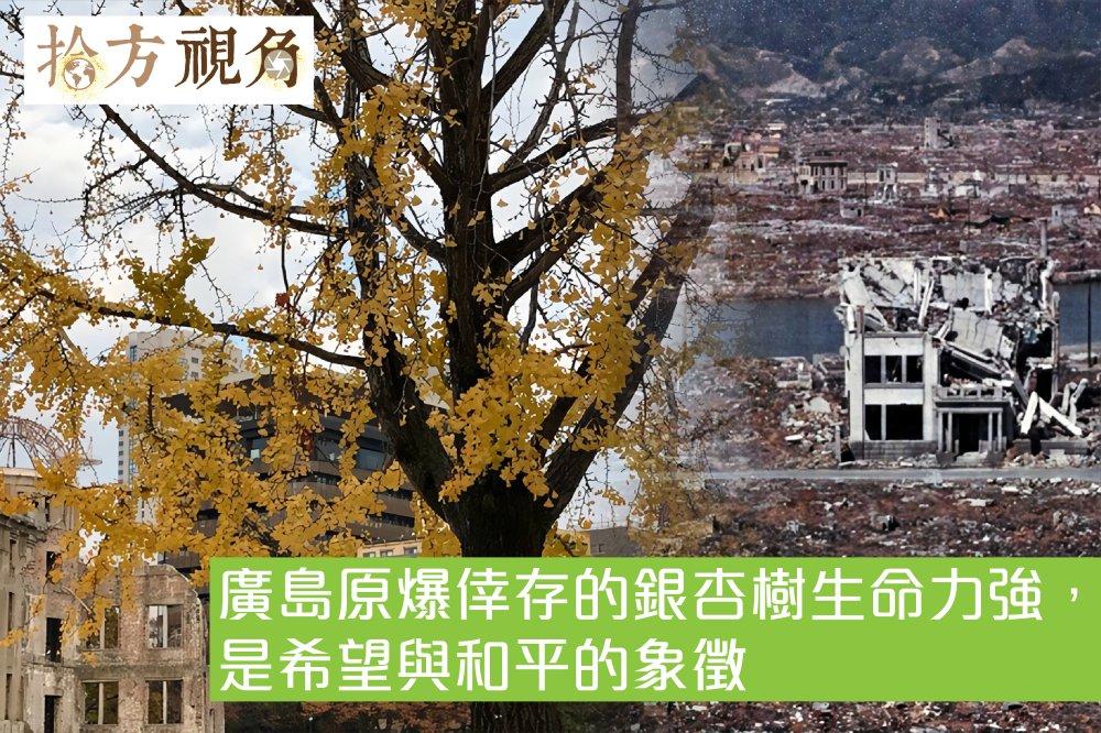 廣島原爆倖存的銀杏樹生命力強,傳播各地宣揚和平和希望…