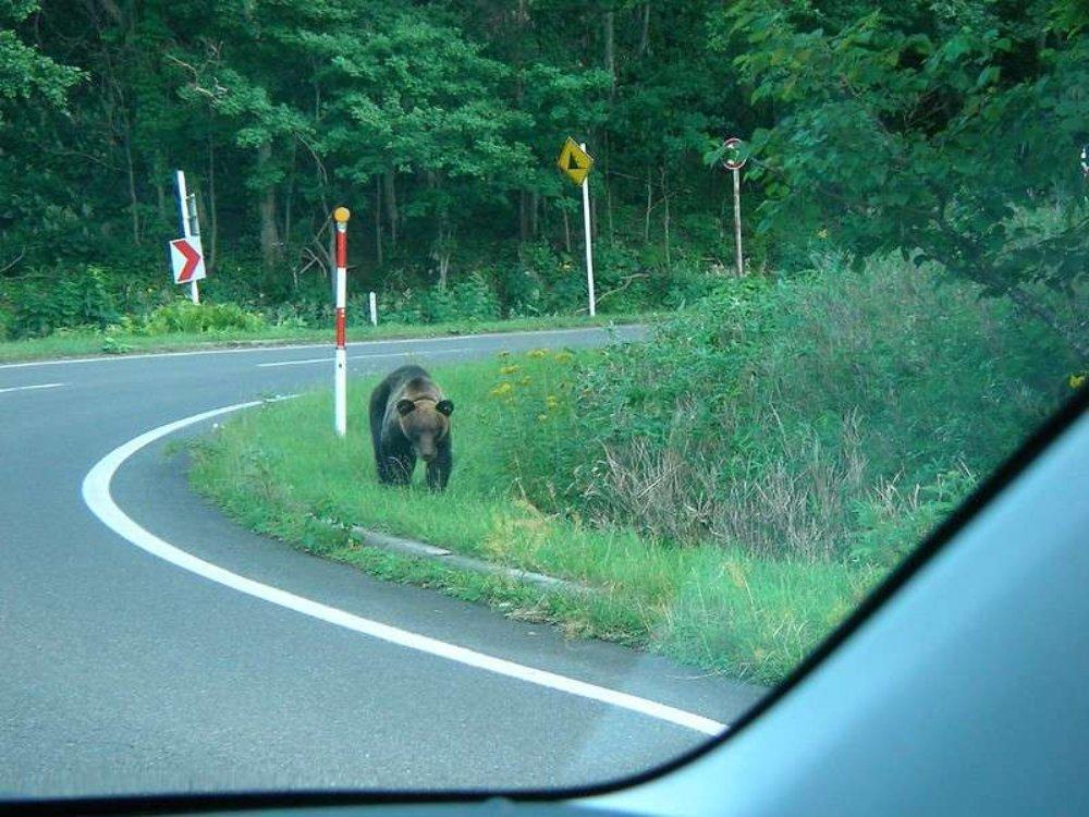 近月來日本野熊出現超過一萬次,想驅趕又不用傷害牠們,這個裝置會奏效嗎?