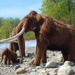 古生物長毛象借種亞洲大象復活!保育瀕危物種的「去滅絕」(de-extinction)計劃是否可行?誰來照顧新「混種」動物的福祉?