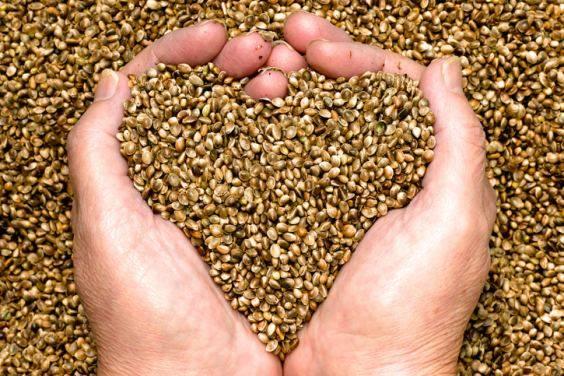 """Come i """"semi Open Source"""" stanno rivoluzionando l'agricoltura"""