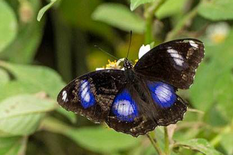 What to do in Luang Prabang - butterfly park