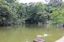 naturaleza-lago
