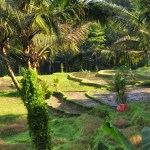 Rijstbouw op terrassen