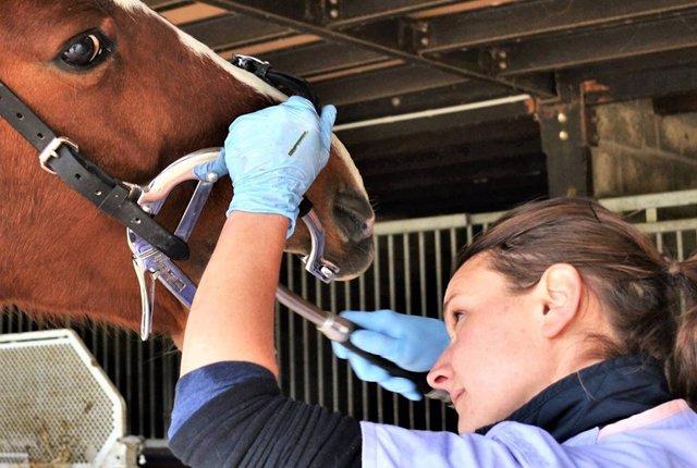 Dentiste équin