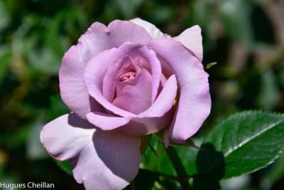 La Roseraie (10)