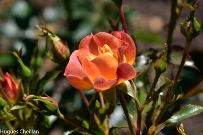 La Roseraie (14)