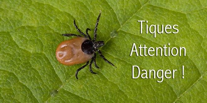 Tiques attention danger