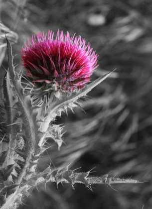 IMG_5484NB rose et gris
