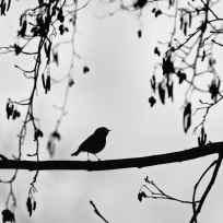 Fabrice Chaillou - L'oiseau