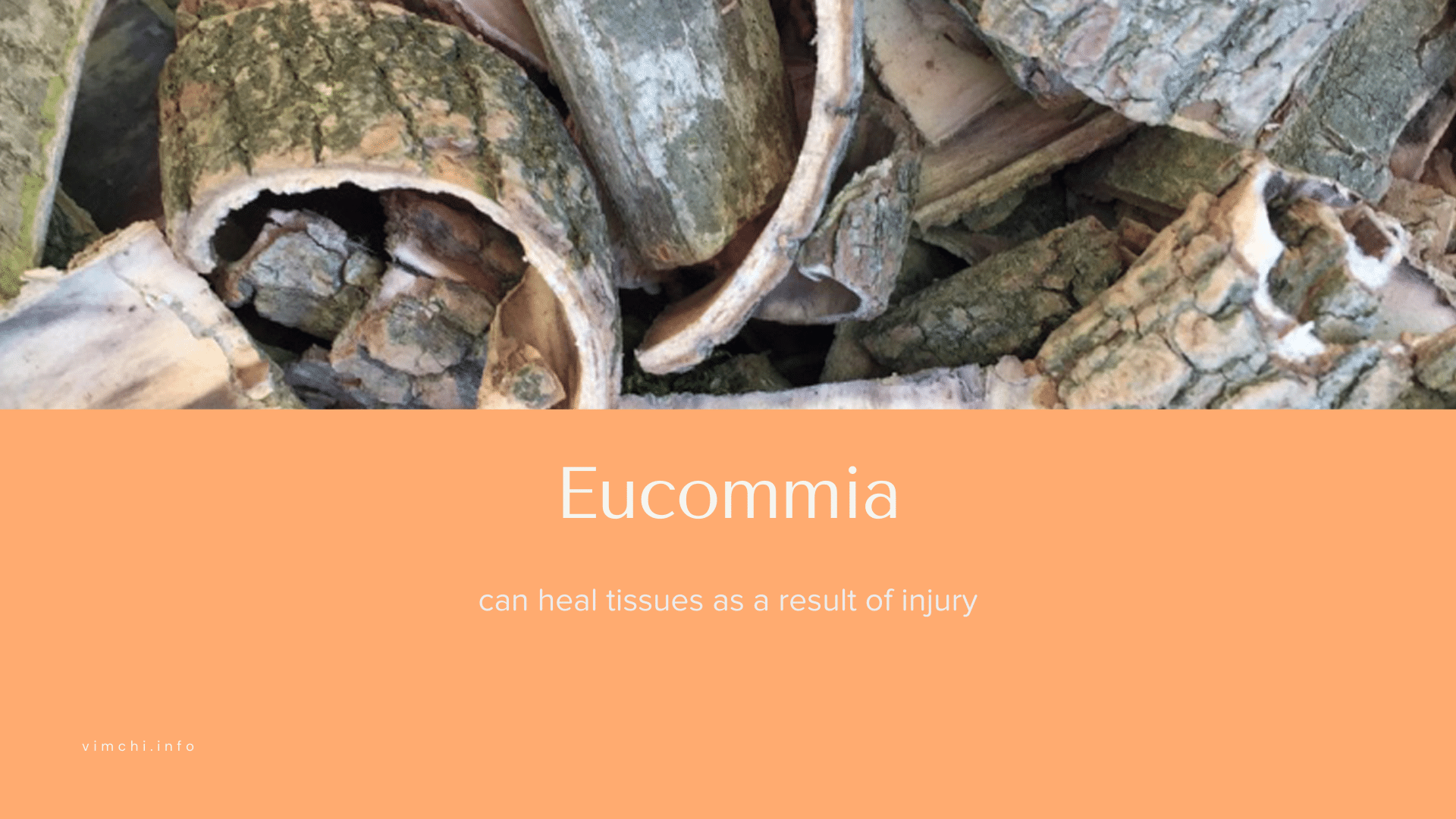 eucommia natural alternative to tramadol