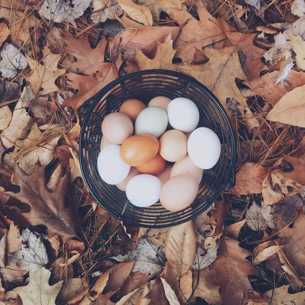 eggs Will Intermittent Fasting Make Me Fat
