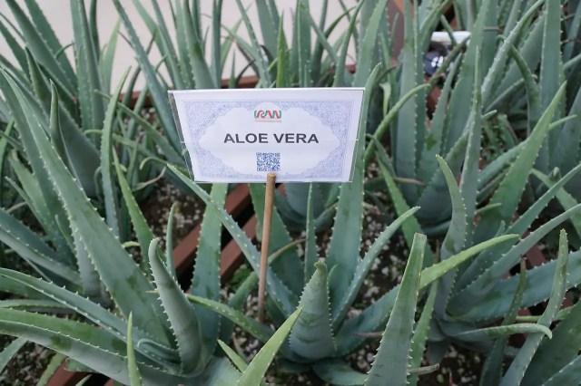 What Does an Aloe Vera Gel Do?