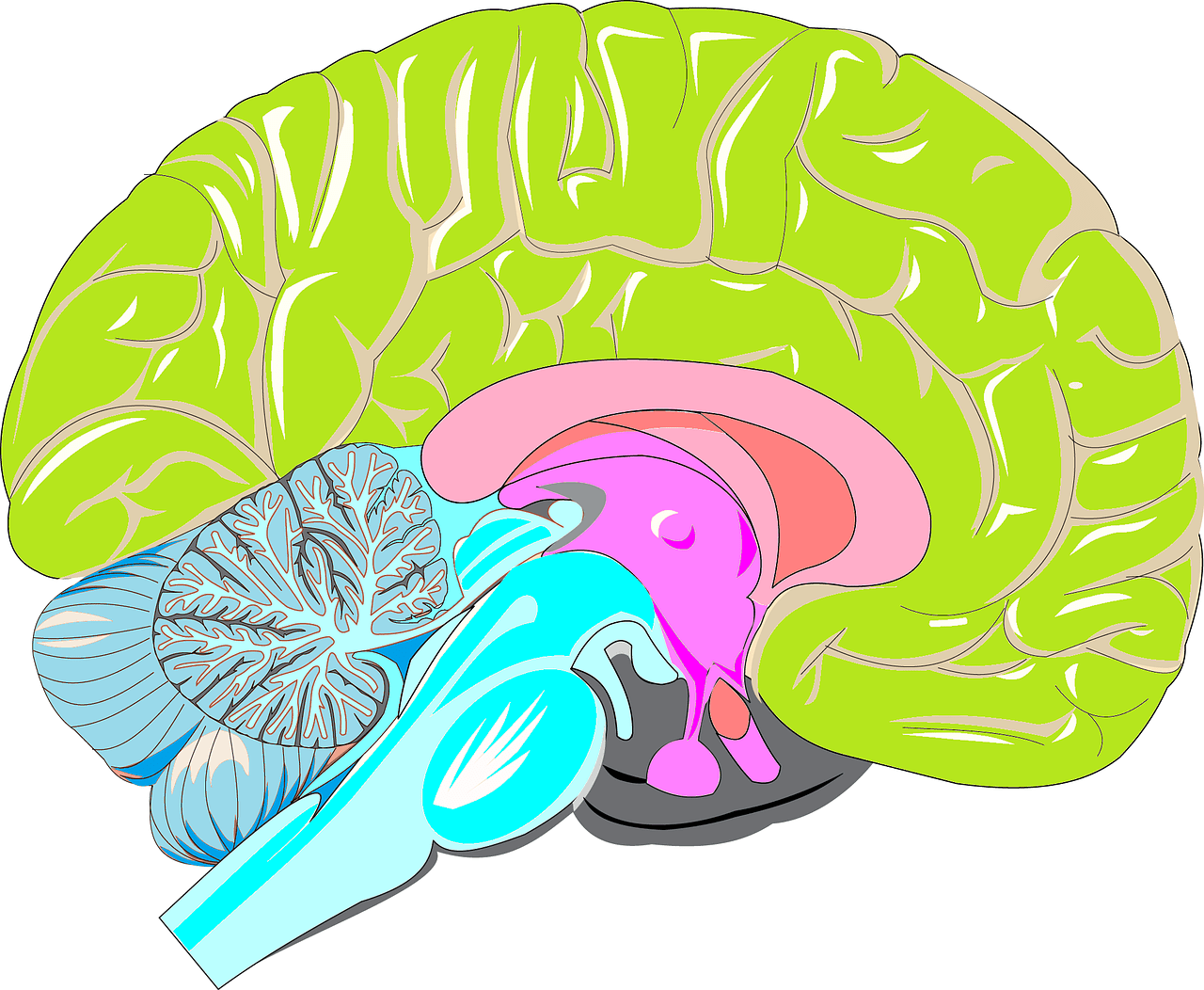 Is Brain Inflammation A Consequence Of Obesity?