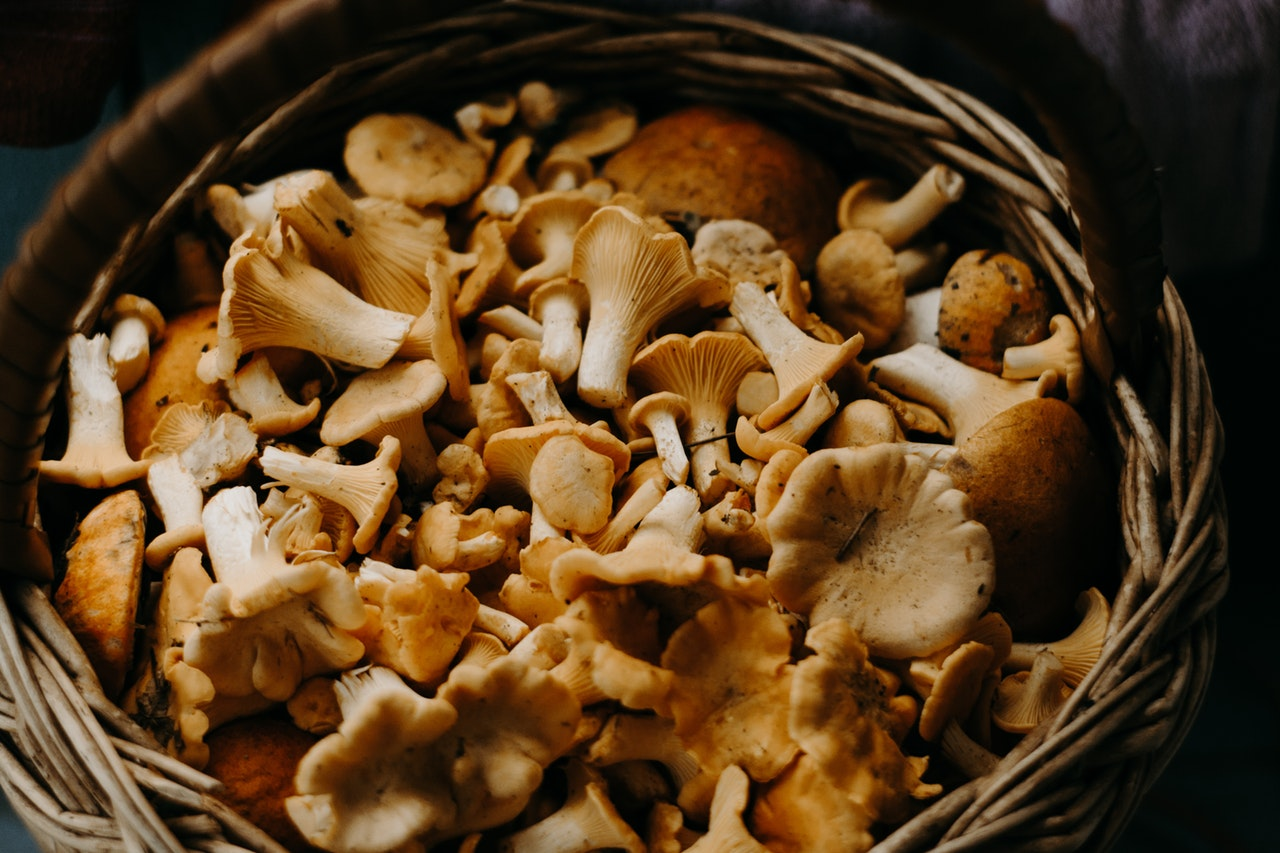 Mushroom - 10 Health and Wellness Trends in 2019