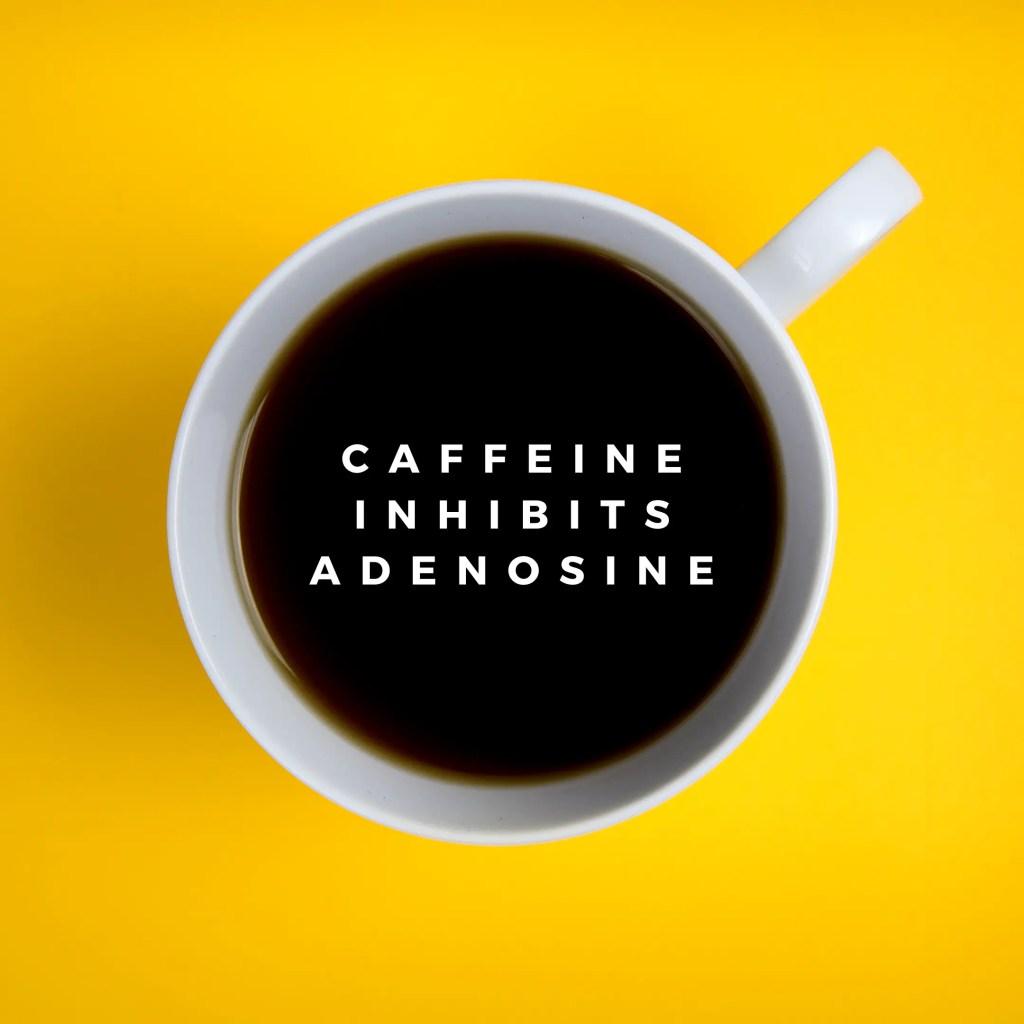 Can Herbalife Tea Cause Anxiety?- caffeine inhibits adenosine