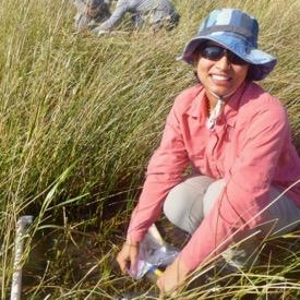 Manisha Pant, a technician in David Johnson's laboratory at VIMS, samples the invertebrate community within a Louisiana salt marsh. © D. Johnson/VIMS.