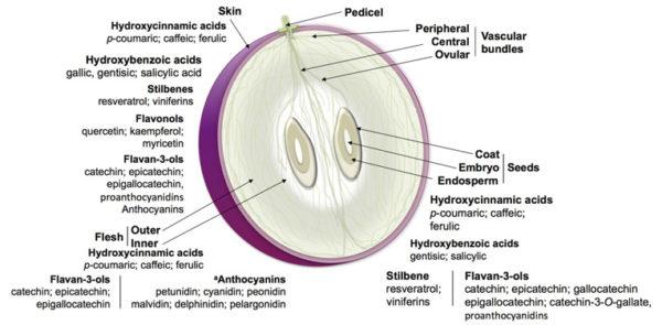Les Anthocyanes du raisin