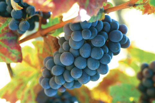 Comment trouver des vins à faible teneur en tanins et des informations sur les tanins