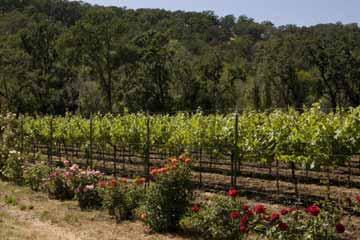 Différentes plantes affectent le sol de différentes manières, ce qui peut être mis à profit dans la viticulture biodynamique.