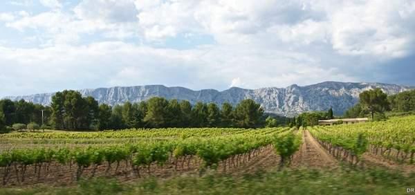 Photo de la région viticole d'Aix-en-Provence