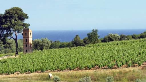 Vin de Provence : Vignoble de Bandol