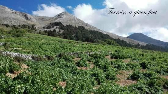 Pic Ataviros 1250 m et vigne d'Athiri pour les vins de Rhode