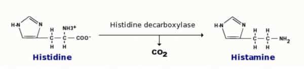 Réaction chimique où le CO2 est ajouté pour produire de l'histamine