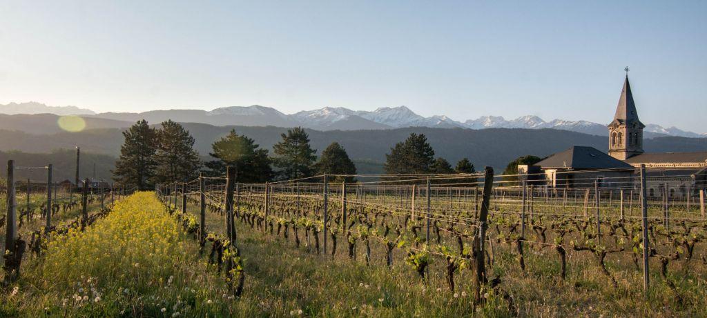 vigne de Mondeuse devant les alpes