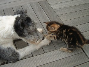 nos-amis-les-animaux