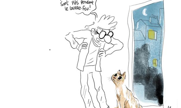 Mon chat et le couvre-feu