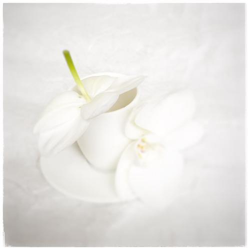 Vinciane Lacroix, tasse et orchidée
