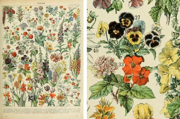 """Planche  """"Fleurs"""" du Petit Larousse Illustré."""