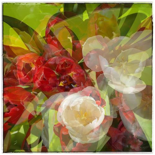 Vinciane Lacroix, résultat du défi #15 les fleurs