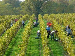 Vinibee-vin bio et naturel-Domaine de Bablut-Christophe Daviau3