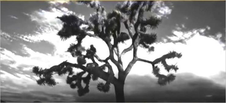 The Joshua Tree - 30th Anniversary (7 LP)