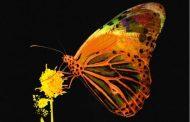 'Mariposa' da a Pablo López su cuarto #1 desde 2017 en venta digital en España
