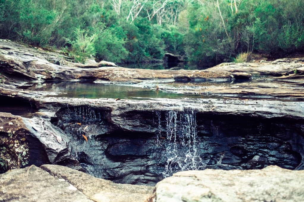 Royal National Park, Australia, Travel Photography, Vin Images