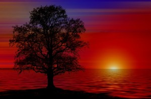 tree-835455_640