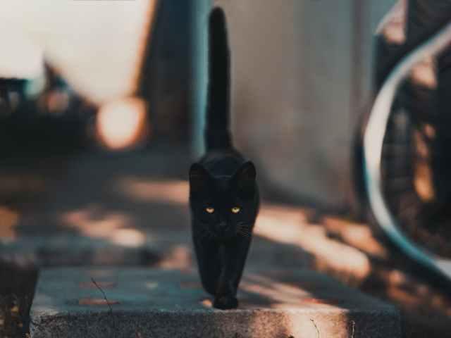 black cat walking on road