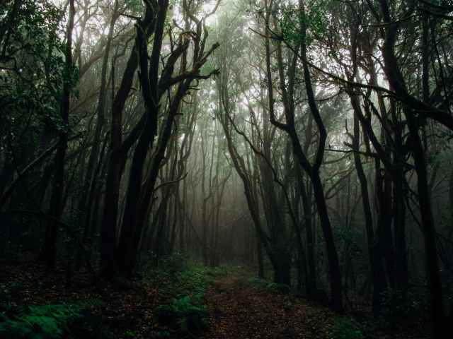 photo of forest with fog