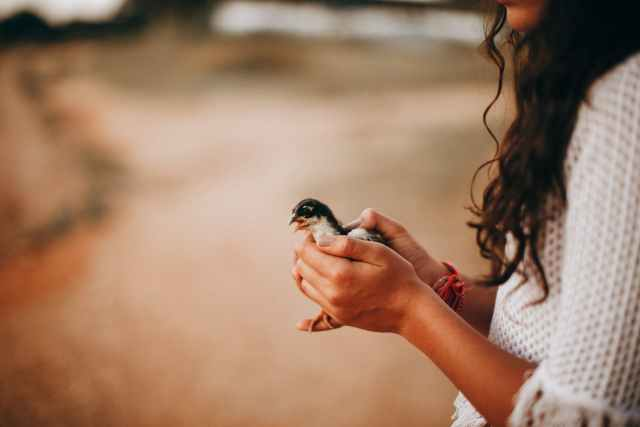 woman with little adorable chick in hands
