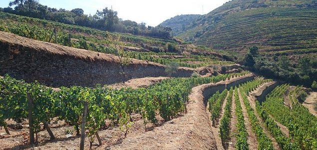 Pinot Noir Douro
