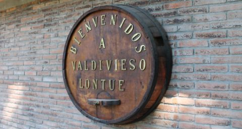 Valdivieso Caballo Loco