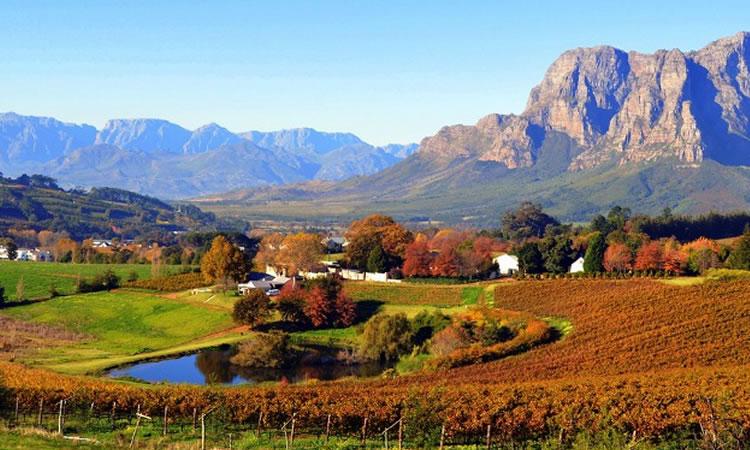 unesco-cape-vineyards
