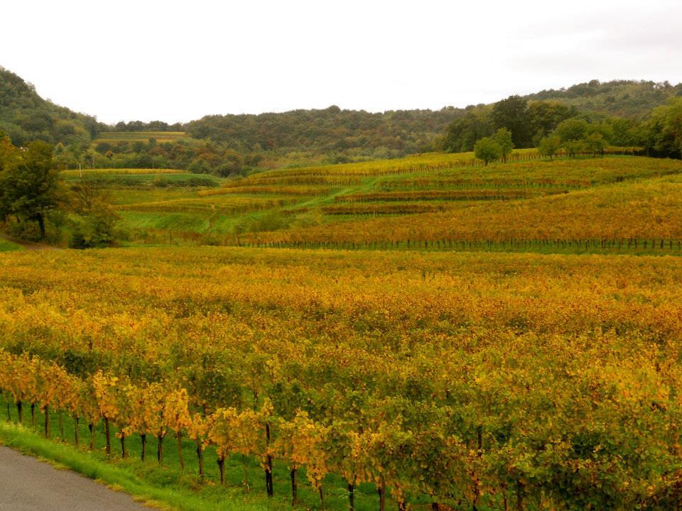 Colline del Collio e Pinot Grigio