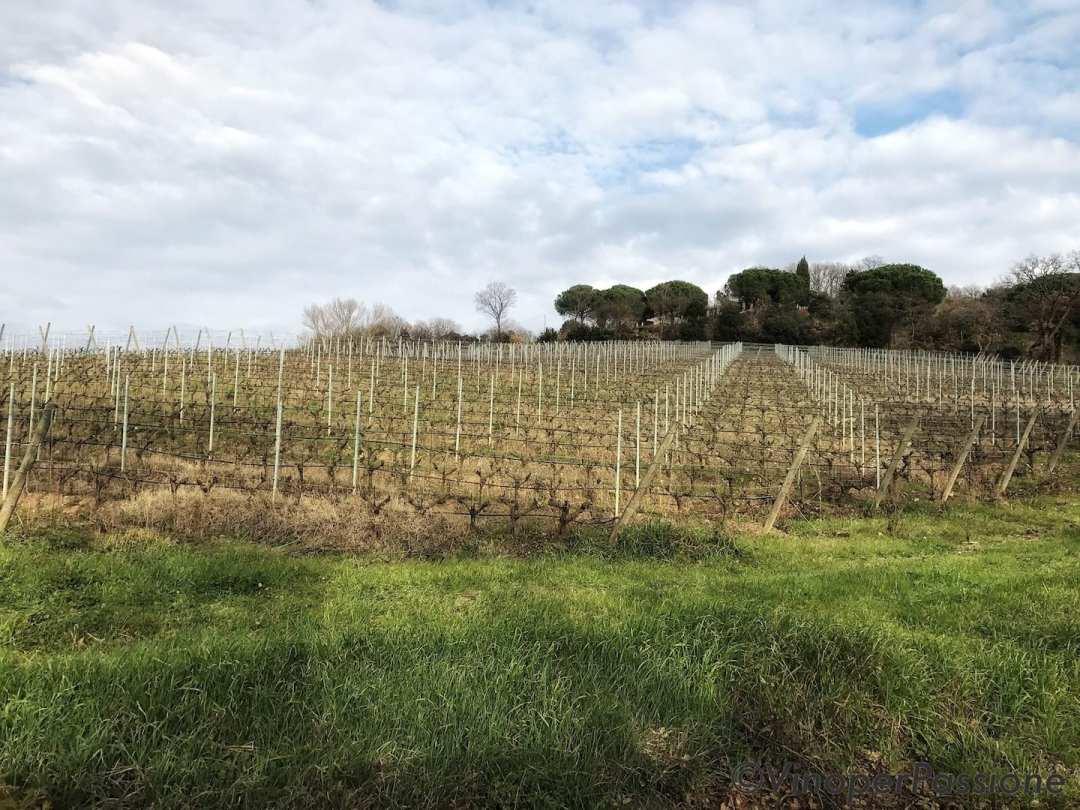 Ot wine Toscana vista vigne