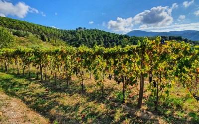 Sulle colline lucchesi Tenuta dello Scompiglio ha unito vino, arte e cultura