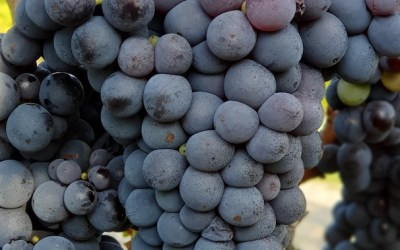 Se è artigianale, allora è un vero vino naturale
