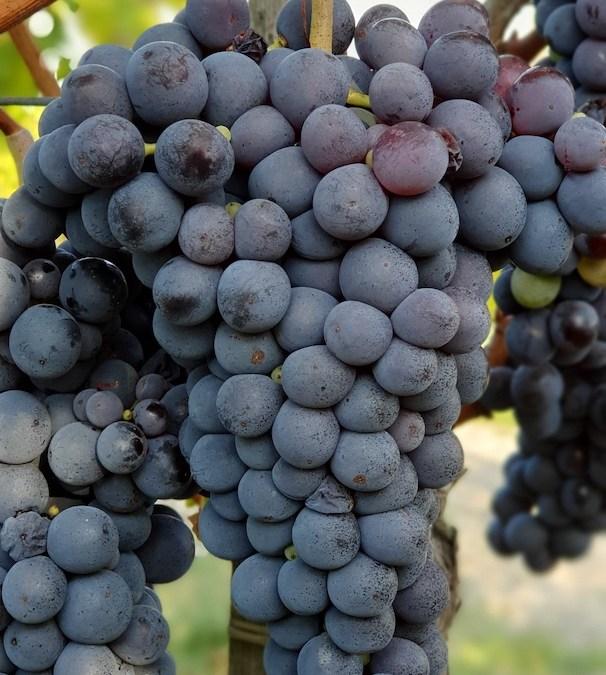 Grappolo vino naturale