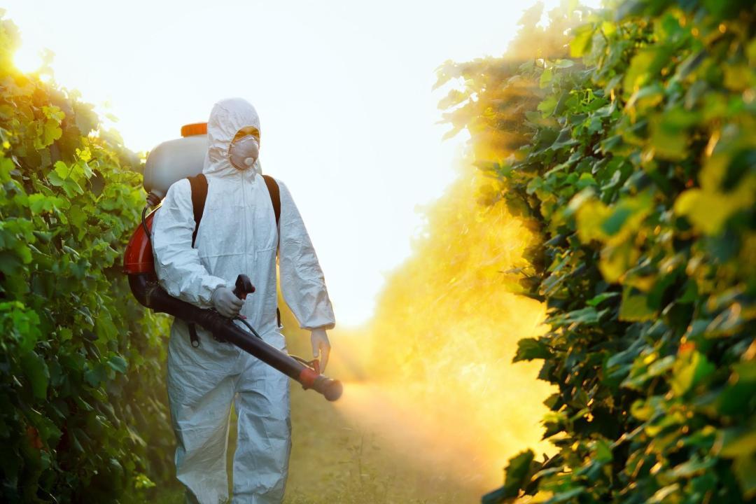 pesticidi in vigna anziché la biodinamica